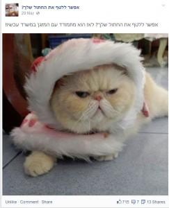 """מתוך דף הפייסבוק """"אפשר ללטף את החתול שלך?""""."""